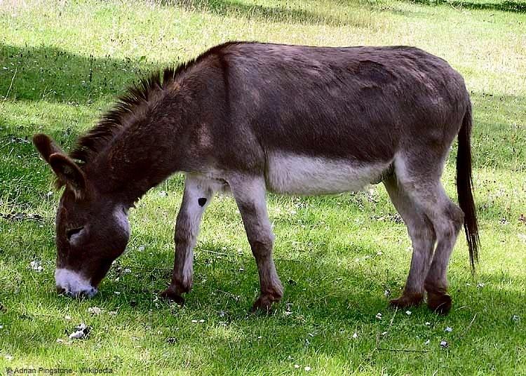 Leichter lernen mit einer Eselsbrücke